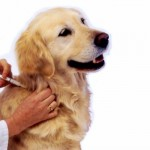 How-Safe-Are-Pet-Vaccinations