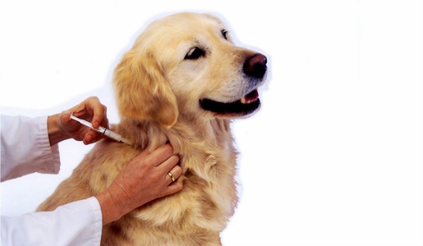 Dog Booster Shots Uk